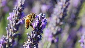 610_bees_09survey